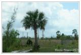 Estero Bay State Buffer Preserve