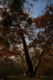 Trees in Mission Trails Park.jpg