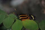 SD Wild Animal Park (WAP) butterflies.JPG