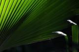 Palm Backlit.JPG