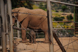 New baby elephant.JPG