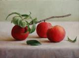 6. Three Ripened Peaches 12 x 16
