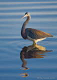 Birding 2010