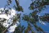 42644- Looking upward