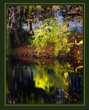 Autumn Leaves 2007