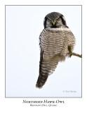 Northern Hawk Owl-036