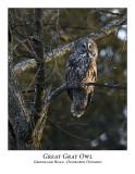 Great Gray Owl-012