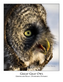 Great Gray Owl-014