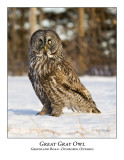 Great Gray Owl-015