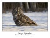 Great Gray Owl-021