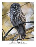 Great Gray Owl-023