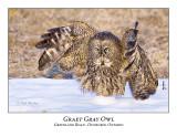 Great Gray Owl-049