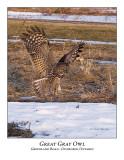 Great Gray Owl-055