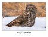 Great Gray Owl-057