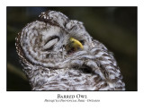 Barred Owl-012