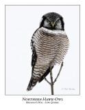 Northern Hawk Owl-046