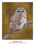 Barred Owl-018