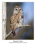 Barred Owl-019