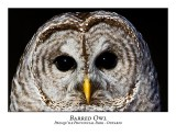 Barred Owl-021