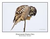 Northern Hawk-Owl-051