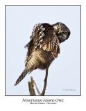 Northern Hawk-Owl-052