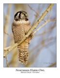 Northern Hawk-Owl-060