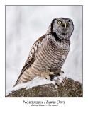 Northern Hawk-Owl-063