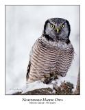 Northern Hawk-Owl-064