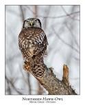 Northern Hawk-Owl-065