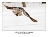 Northern Hawk-Owl-066