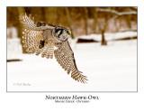 Northern Hawk-Owl-067