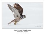 Northern Hawk-Owl-072