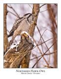 Northern Hawk-Owl-075