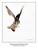 Northern Hawk-Owl-079