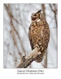 Great Horned Owl-011