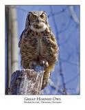 Great Horned Owl-012