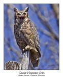 Great Horned Owl-013
