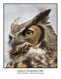Great Horned Owl-014