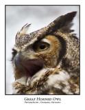 Great Horned Owl-015