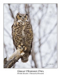 Great Horned Owl-016