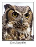 Great Horned Owl-017