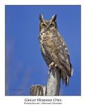 Great Horned Owl-018