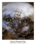 Great Horned Owl-020