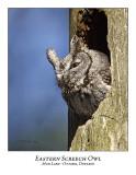Eastern Screech Owl-005