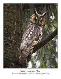 Long-eared Owl-014