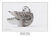 Snowy Owl-090