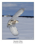 Snowy Owl-094