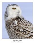 Snowy Owl-097