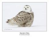 Snowy Owl-117