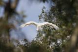 Wetlands008.jpg